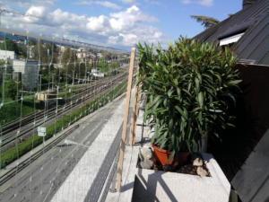 Sécurité à chat pour balcon.
